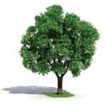 دانلود آهنگ روز درختکاری