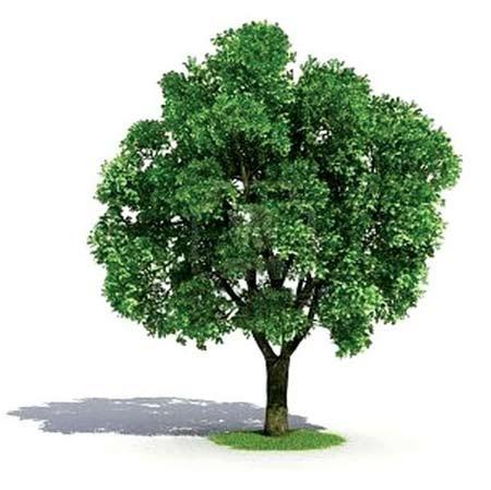 دانلود آهنگ های روز درختکاری